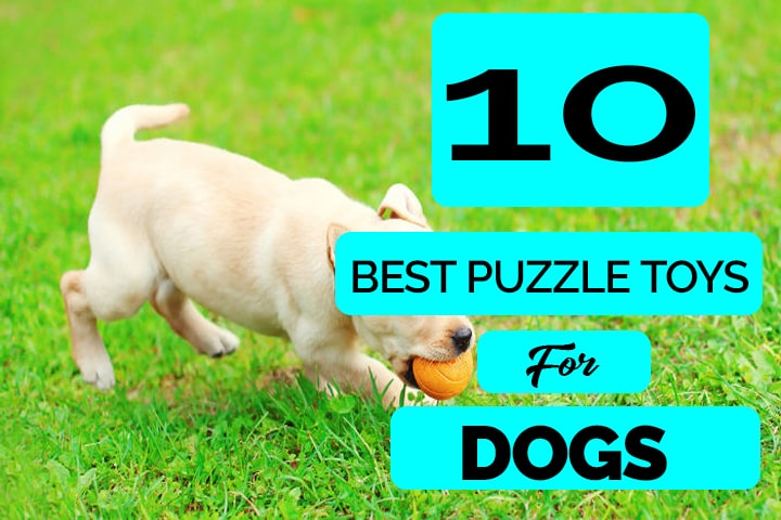 Best Puzzle Toy for Dogs