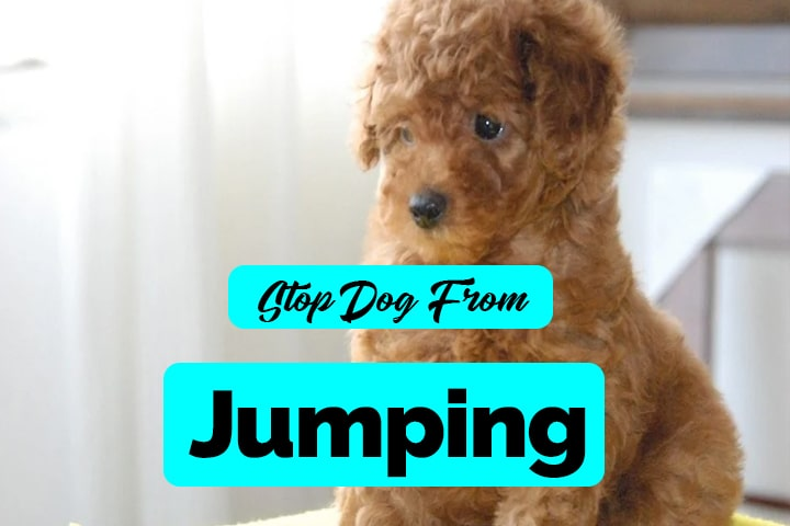 stop dog from jumping over you